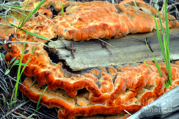 Shrooms Photograph - Overgrown by Lauren Leigh Hunter Fine Art Photography