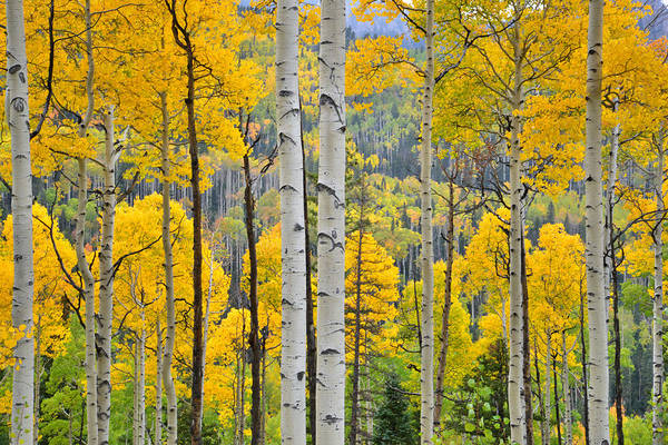 Photograph - Owl Creek Pass Fall Colors by Ray Mathis