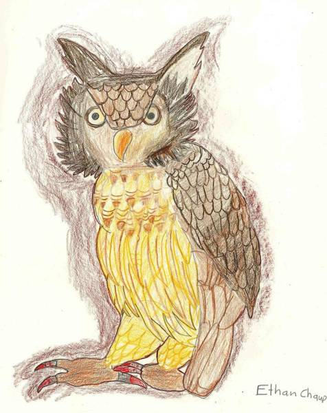 Drawing - Wise Owl by Ethan Chaupiz
