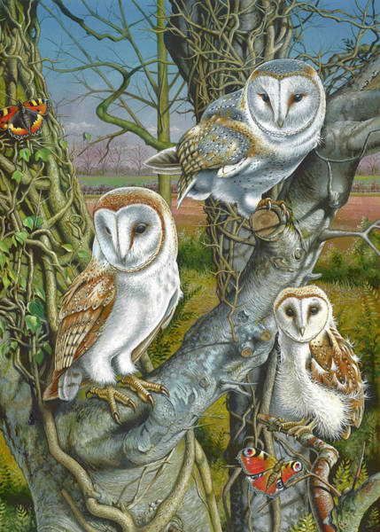 Portriat Photograph - Owl Gathering by MGL Meiklejohn Graphics Licensing