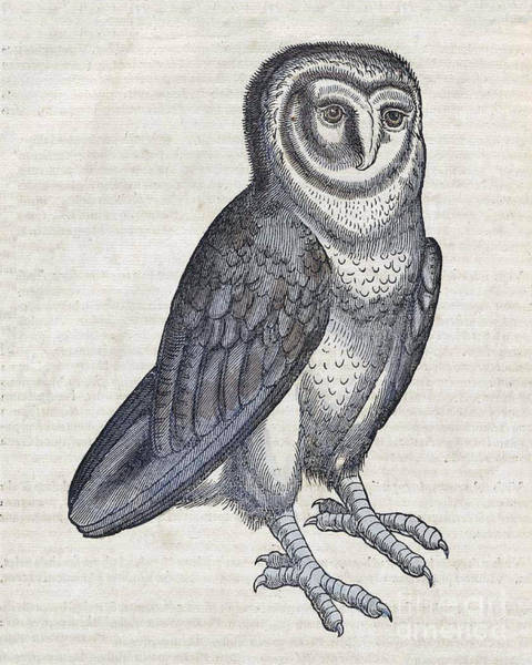 Photograph - Owl Historiae Animalium 16th Century by Science Source