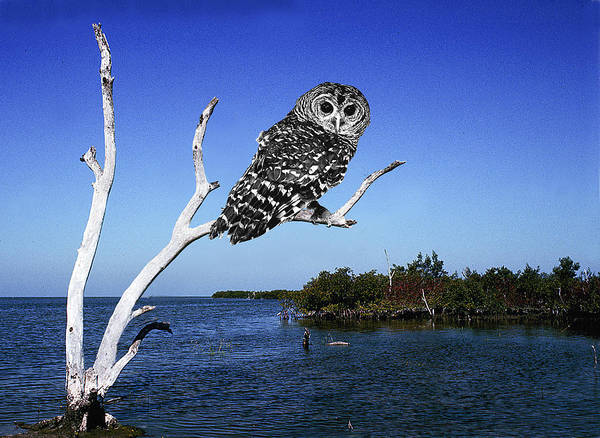 Wall Art - Digital Art - Owl In Dead Tree by Fred Leavitt