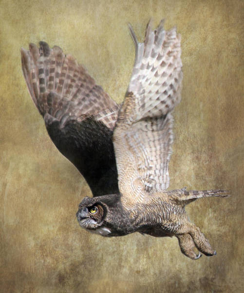 Vogel Photograph - Owl In Flight by Angie Vogel