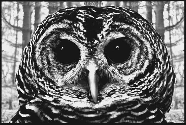 Wall Art - Digital Art - Owl In Woods by Fred Leavitt