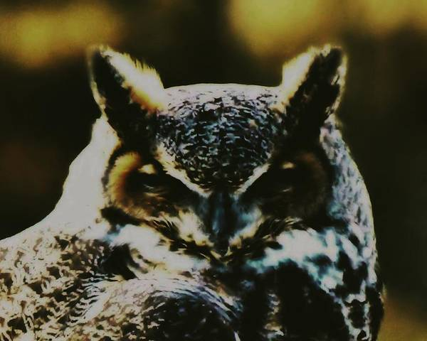 Photograph - Owl Portrait by John Feiser