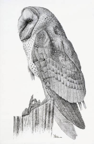 Drawing - Owl by Sam Davis Johnson