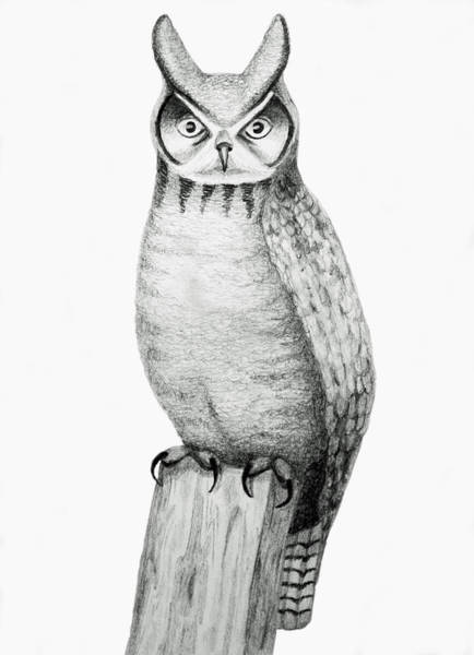 Coolidge Drawing - Owl by Sara Coolidge