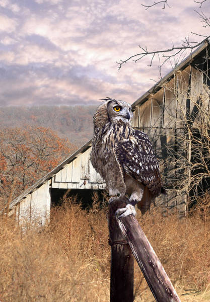 Photograph - Owl by M Spadecaller