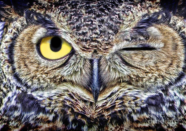Photograph - Owl Winking by Mike Agliolo