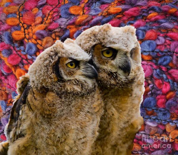 Photograph - Owlets In Color by Les Palenik