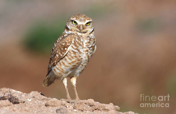 Wall Art - Photograph - Owling by Ruth Jolly