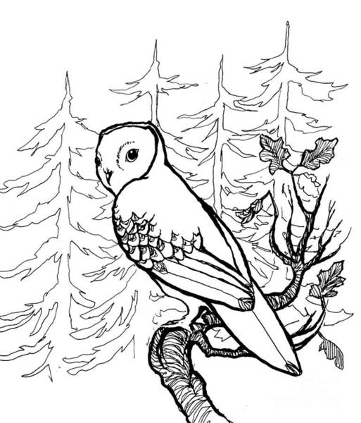 Hooter Drawing - Ow'll Be Back by Erja Wiltse