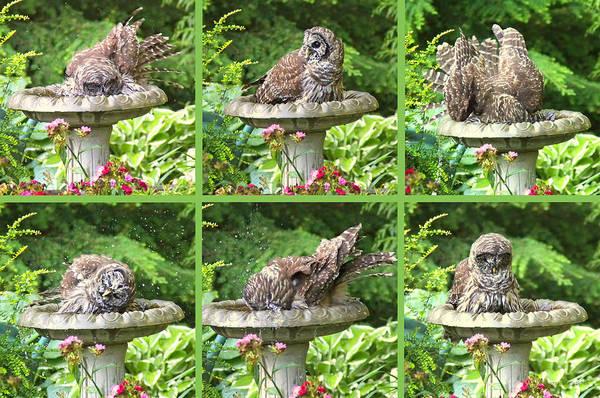Barred Owl Photograph - Owls Do Take Baths by Jennie Marie Schell