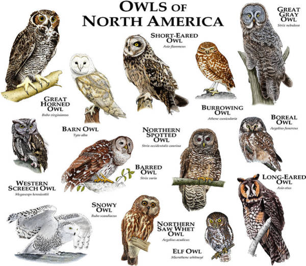 Wall Art - Photograph - Owls Of North America by Roger Hall