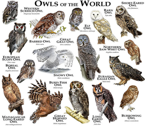 Wall Art - Photograph - Owls Of The World by Roger Hall
