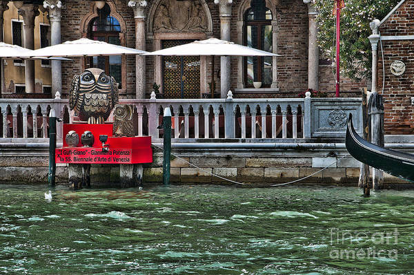 Lion Of St Mark Photograph - Owls On The Grand Canal by Brenda Kean