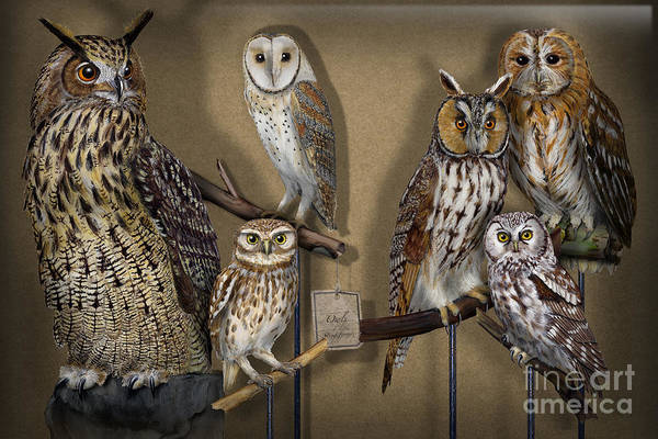 Painting - Owls - Show-case Collection - Chouettes - Hiboux - Lechuzas - Mochos - Strigiformes Strigidae by Urft Valley Art