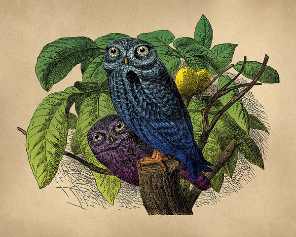 Wall Art - Digital Art - Owls Vintage Illustration by Flo Karp