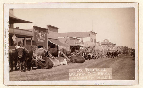 United States Territory Photograph - Ox Teams At Sturgis, D.t. I.e. Dakota Territory by Litz Collection
