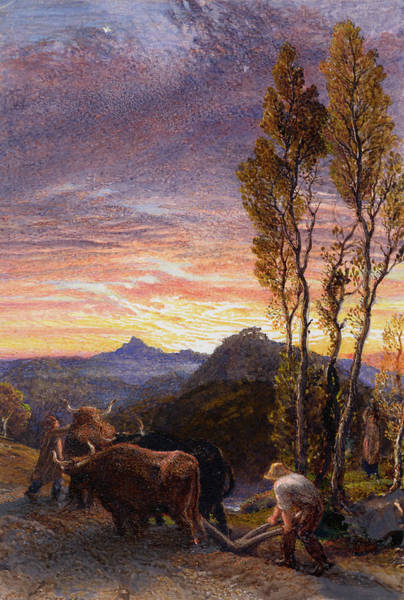 Ploughing Painting - Oxen Ploughing At Sunset by Samuel Palmer