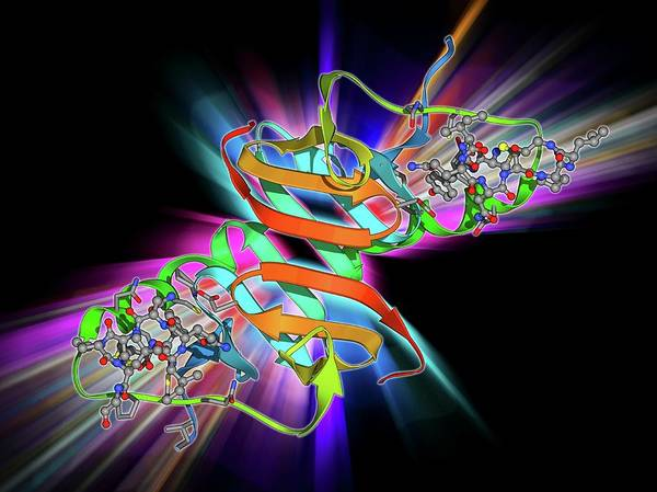 Neurotransmitter Wall Art - Photograph - Oxytocin And Carrier Protein by Laguna Design