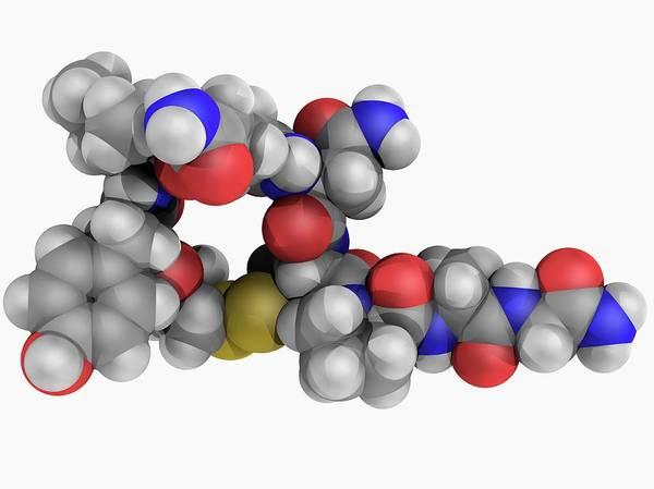 Molecular Wall Art - Photograph - Oxytocin Hormone Molecule by Laguna Design/science Photo Library