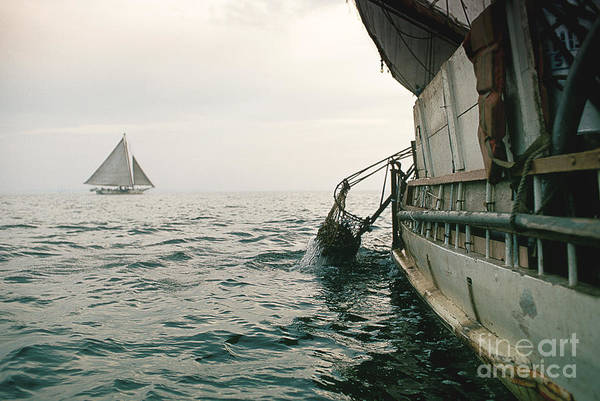 Skipjack Wall Art - Photograph - Oyster Dredging by James L. Amos