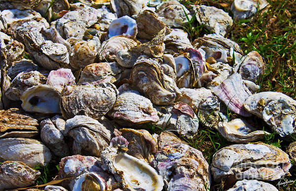 Photograph - Oysters 01 by Melissa Sherbon