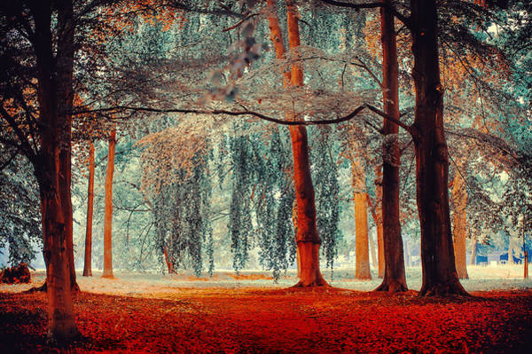 Photograph - Alien Forest. Nature In Alien Skin by Jenny Rainbow