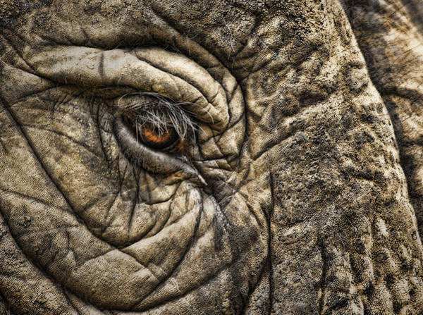 Wall Art - Photograph - Pachyderm Skin by Daniel Hagerman
