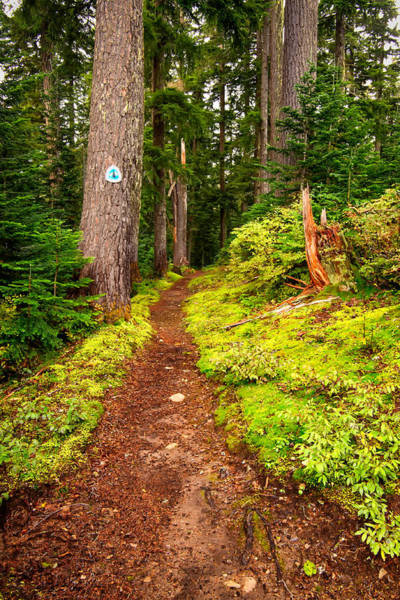 Kittitas County Wall Art - Photograph - Pacific Crest Trail - Meadow Pass - Washington - October 2013 by Steve G Bisig