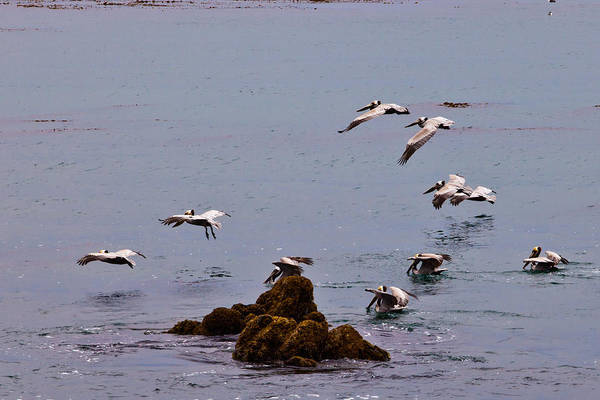 Photograph - Pacific Landing by Melinda Ledsome