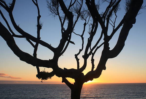 Photograph - Pacific Tree Sunset by Daniel Schubarth