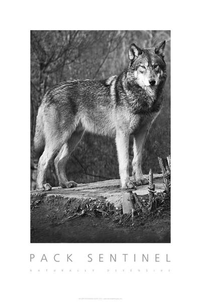 Pack Sentinel Naturally Defensive Poster Art Print