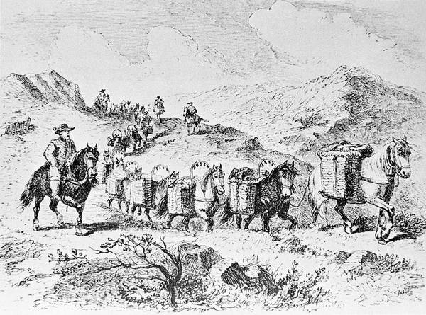 Wall Art - Photograph - Packhorses Carrying Goods by Science Photo Library