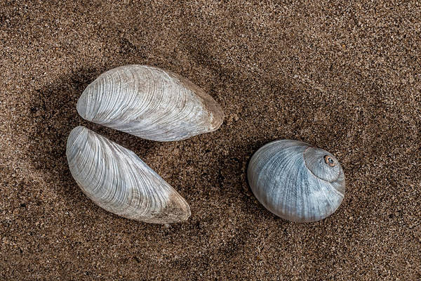 Photograph - Pac-man Shells On The Beach by Gary Slawsky