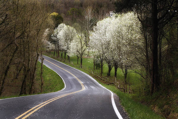 Sullivan County Photograph - Pactolus Road by Earl Carter