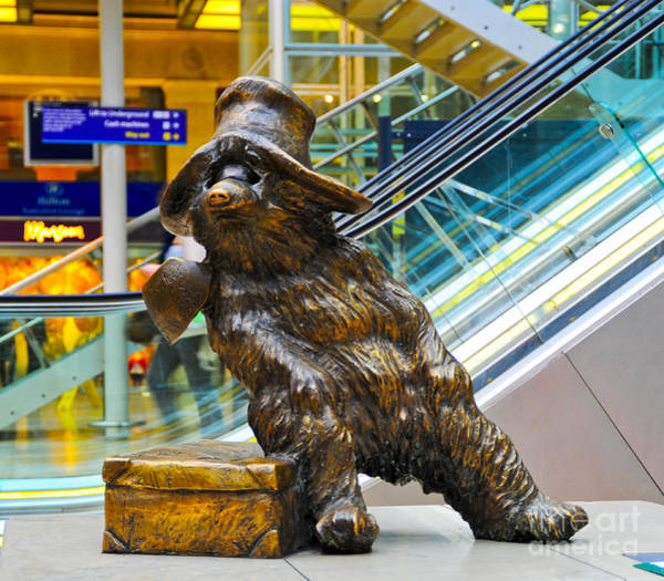 Wall Art - Photograph - Paddington Bear by Donald Davis