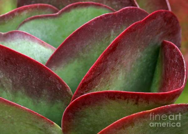 Photograph - Paddle Leaf by Sabrina L Ryan