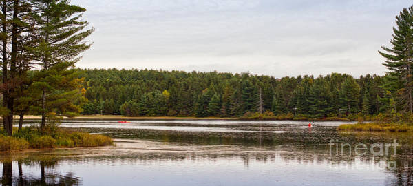 Photograph - Paddling In Algonquin Park by Les Palenik