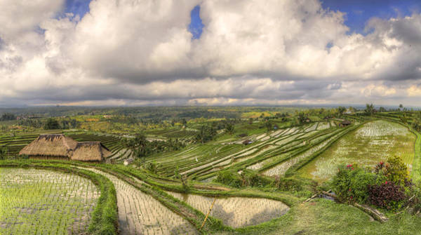 Indonesian Culture Photograph - Paddy Fields by Filippo Maria Bianchi