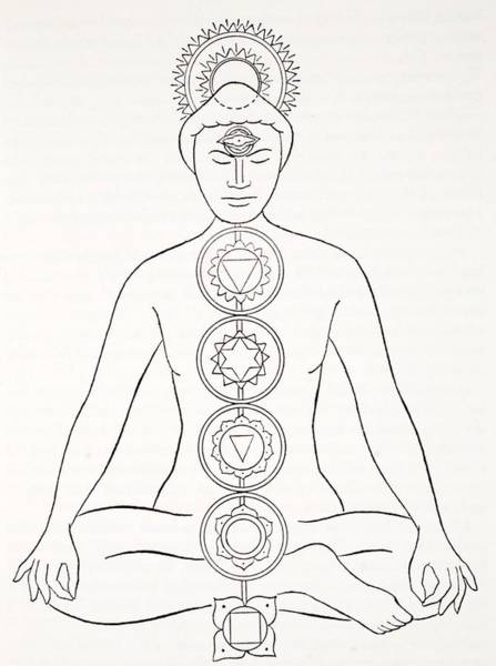India Ink Wall Art - Drawing - Padmasana Or Lotus Position by English School