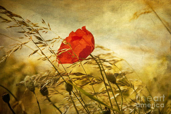 Feld Wall Art - Photograph - Paint A Poppy  by Dirk Wuestenhagen