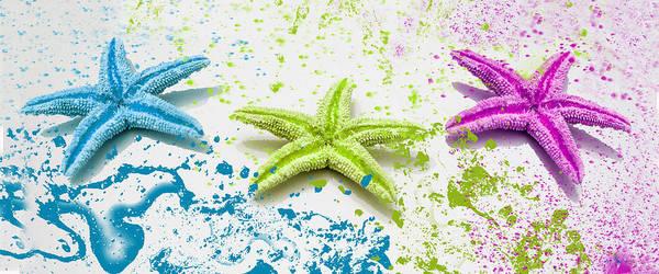 Wall Art - Photograph - Paint Spattered Star Fish by Mechala Matthews