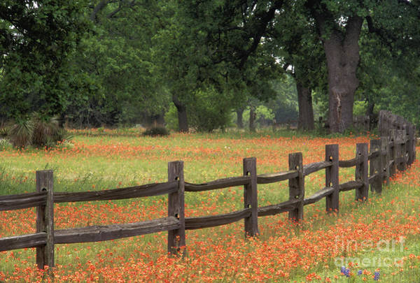 Prarie Photograph - Paintbrush Fence - Fs000909 by Daniel Dempster