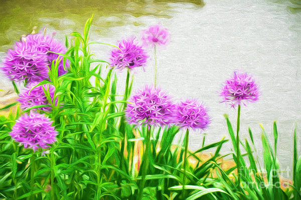 Photograph - Alliums Along The Waterfront by Andee Design