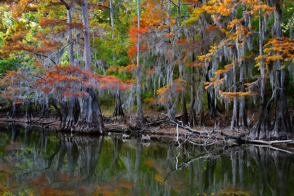 Bald Cypress Photograph - Painted Bayou by Lana Trussell