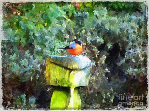 Painting - Painted Bullfinch S1 by Vix Edwards