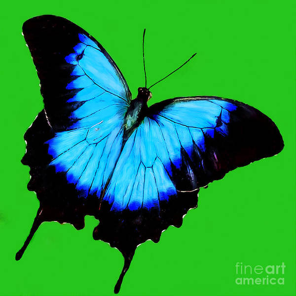 Digital Art - Painted Butterfly by Bob and Nadine Johnston