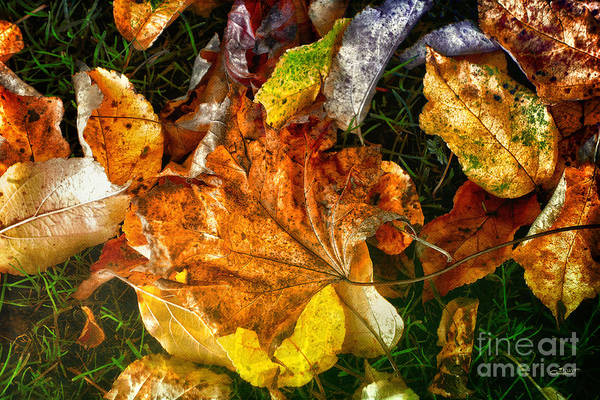 Photograph - Painted By Autumn by Jutta Maria Pusl
